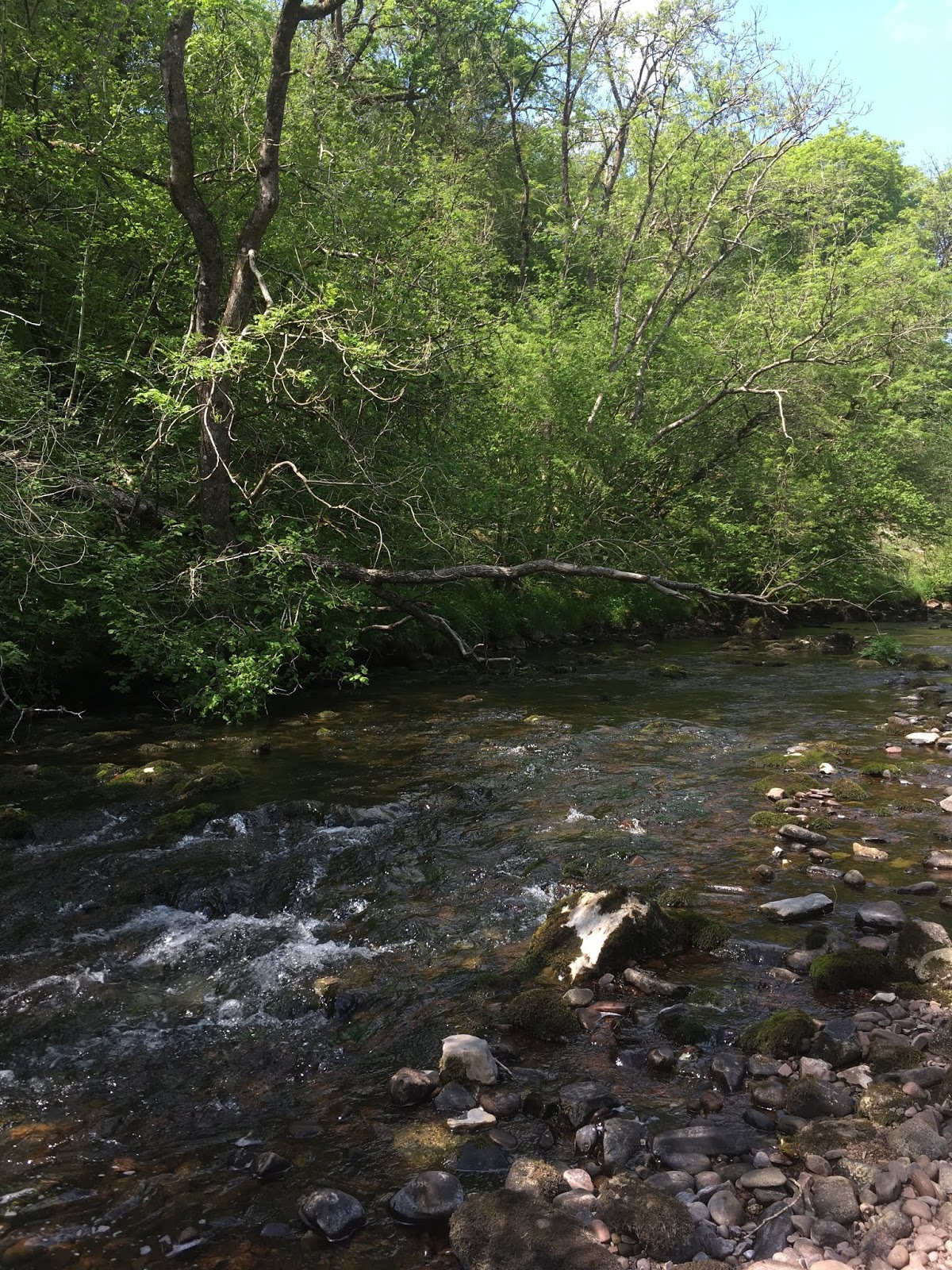 4c17f-river
