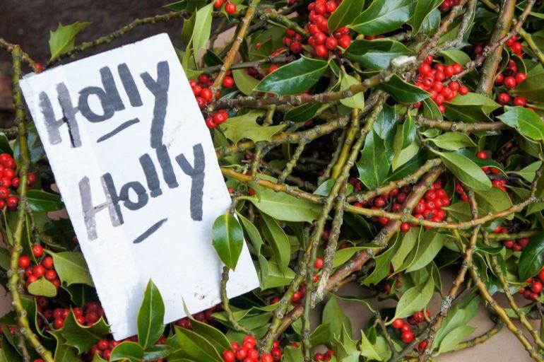 Holly holly